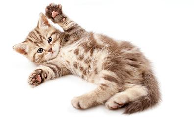 kitten-grooming