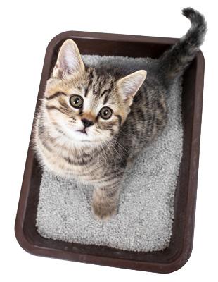 kitten-litterbox  sc 1 st  Animal Hospital of East Davie & Litter Box Training Your Cat u2013 Animal Hospital of East Davie Aboutintivar.Com
