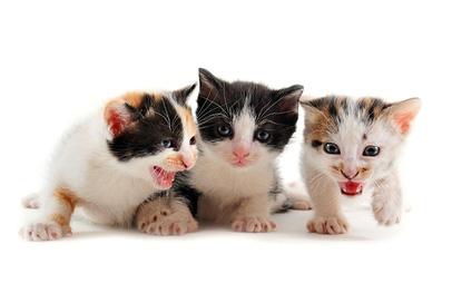 kittens-crazy