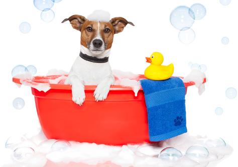 puppy-bath