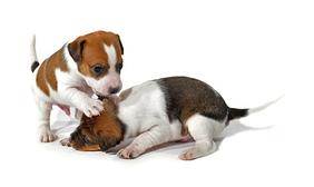 puppy-proof